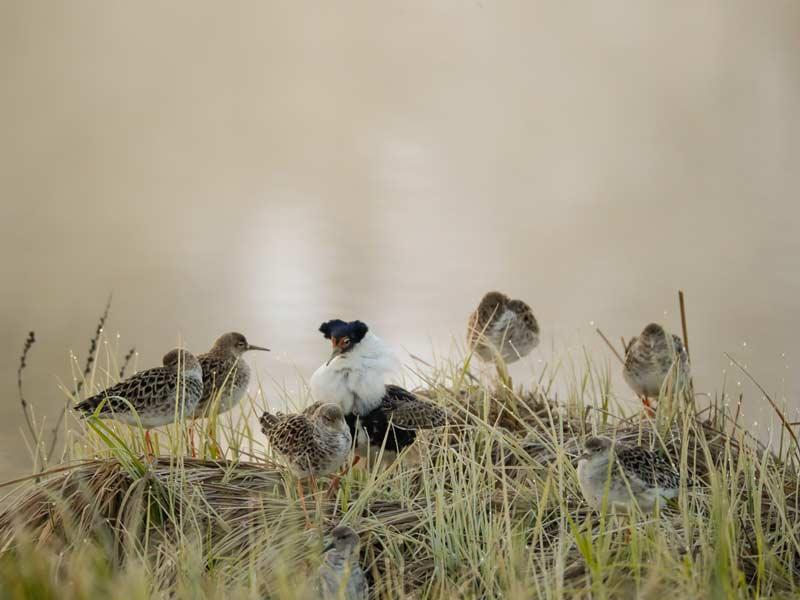 Ylämäen Virkityslomat - linnut veden äärellä