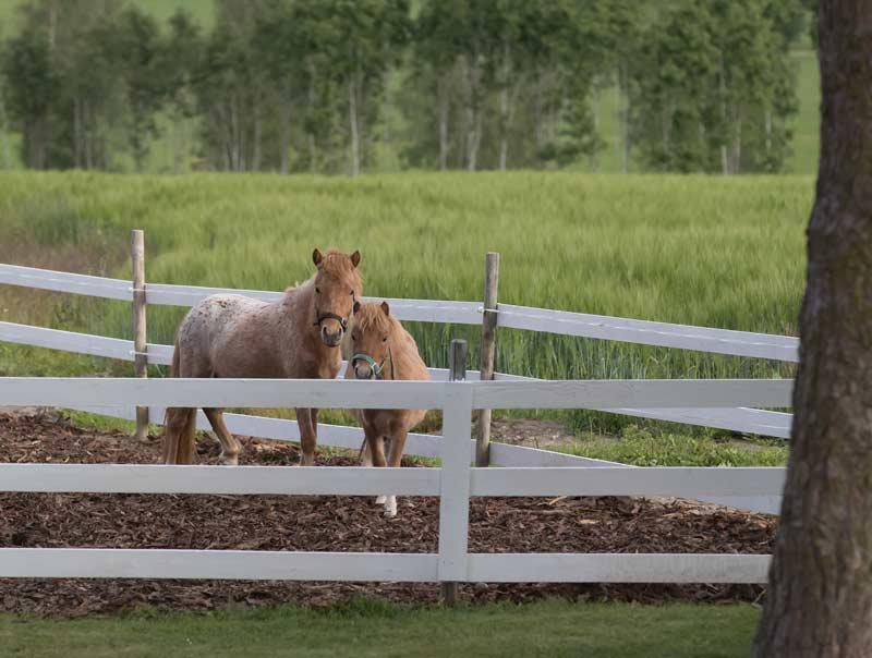 Ylämäen Virkityslomat - hevoset